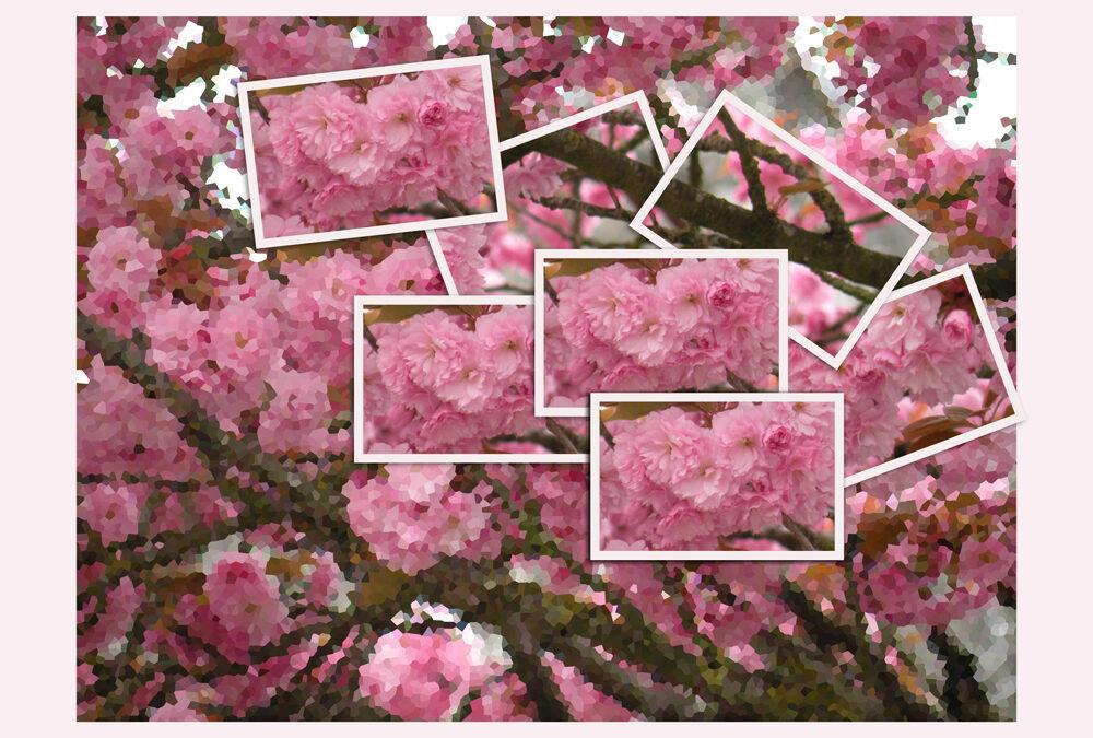 Snoei, groei en… bloei! 't Is lente, maak ruimte in jezelf